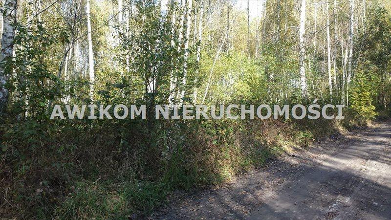 Działka rolna na sprzedaż Jaktorów, Międzyborów  4200m2 Foto 4
