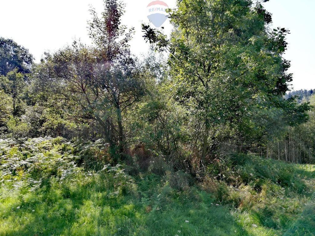 Działka rekreacyjna na sprzedaż Krzeszów  1675m2 Foto 5