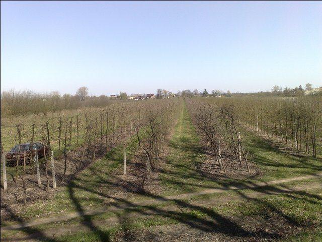 Działka rolna na sprzedaż Radwanków Szlachecki  8100m2 Foto 3