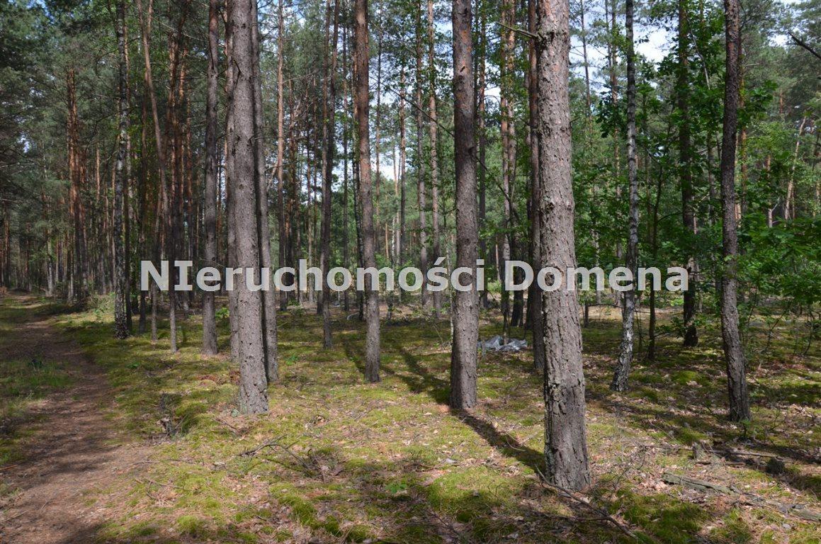 Działka leśna na sprzedaż Poświętne  11400m2 Foto 4