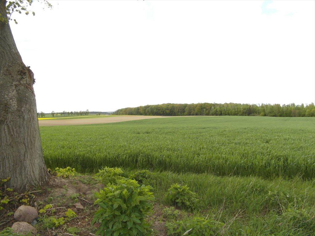 Działka rolna na sprzedaż Orle  111800m2 Foto 4