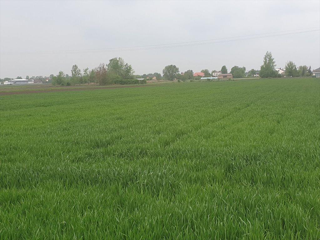 Działka rolna na sprzedaż Topolin  3000m2 Foto 4