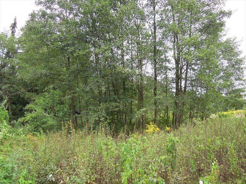 Działka rolna na sprzedaż Wilczyn, Wilczyn Leśny  22000m2 Foto 4