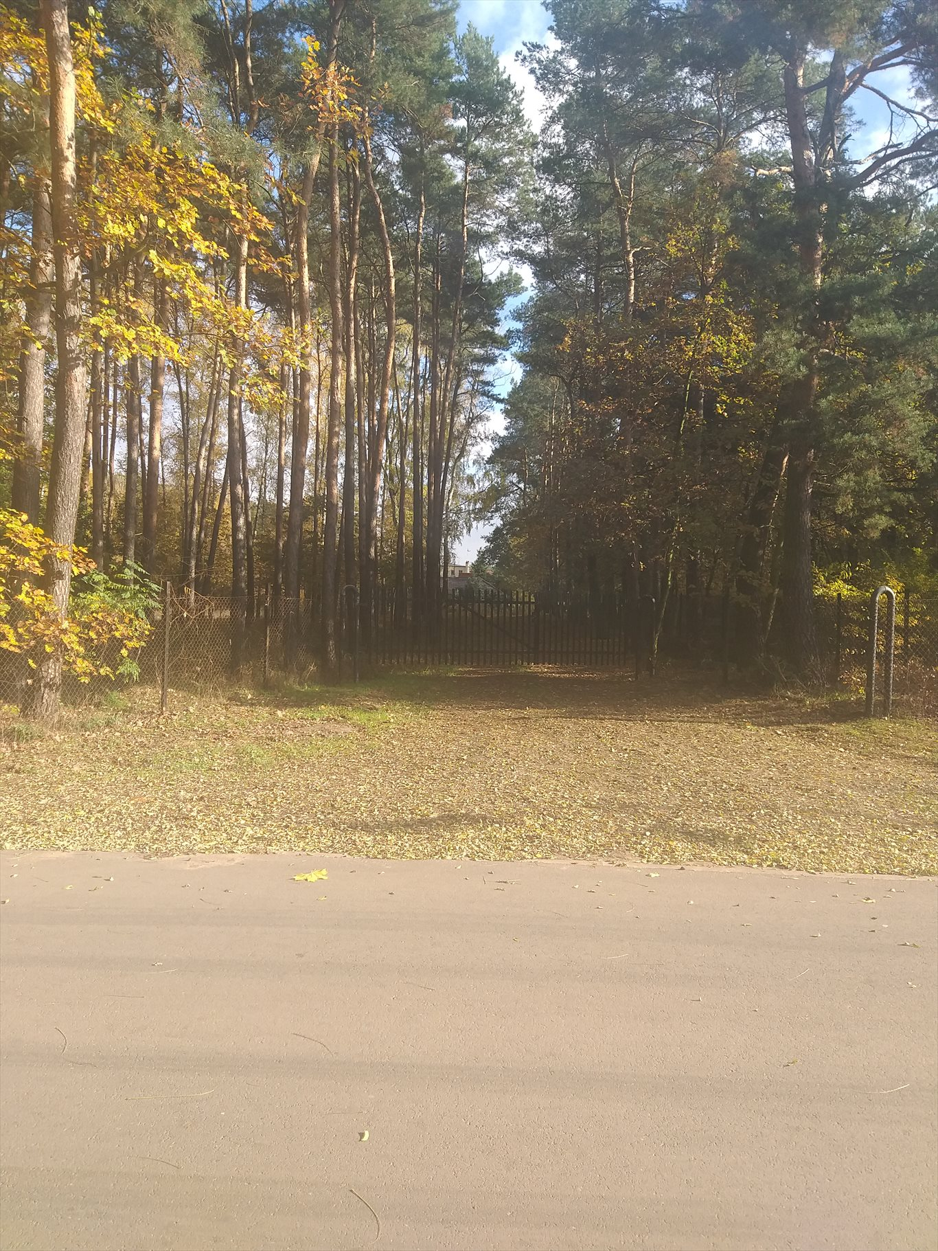 Działka inwestycyjna na sprzedaż Jerzykowo, Sosnowa  11700m2 Foto 5