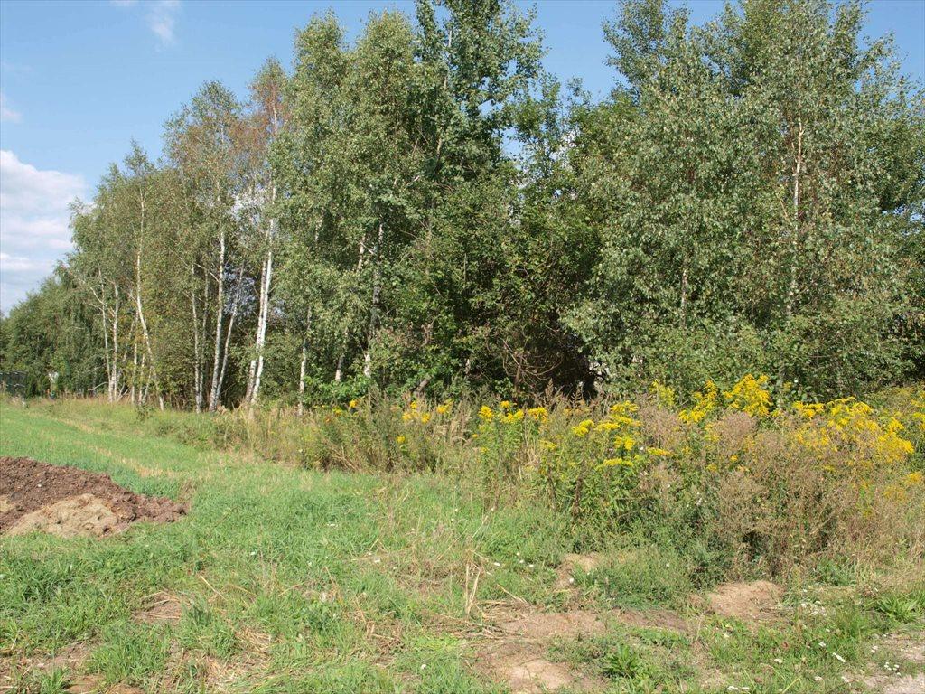 Działka budowlana na sprzedaż Wierzchowisko  1054m2 Foto 3