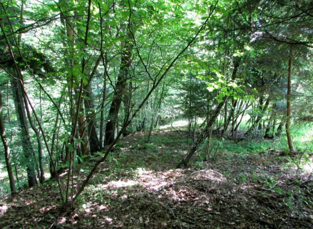 Działka leśna na sprzedaż Harta, Harta, Harta  14266m2 Foto 5