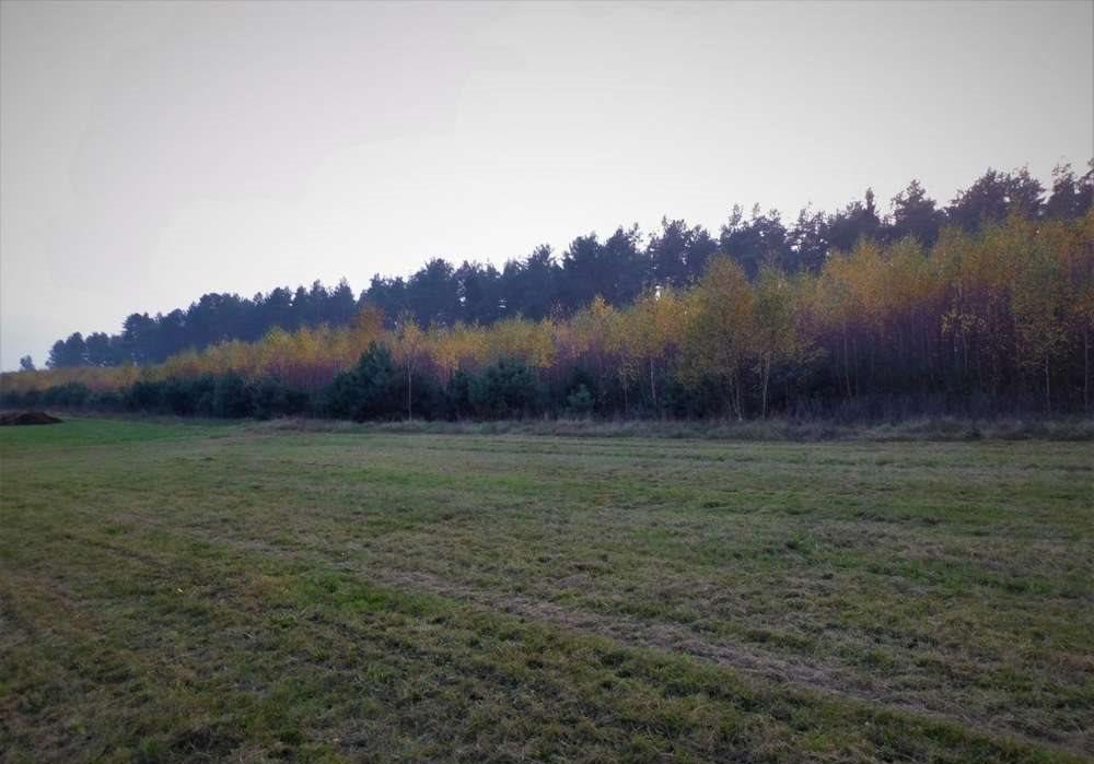 Działka rolna na sprzedaż Orzyny  3300m2 Foto 3