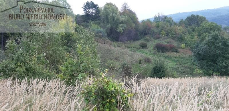Działka rolna na sprzedaż Babica  4300m2 Foto 2