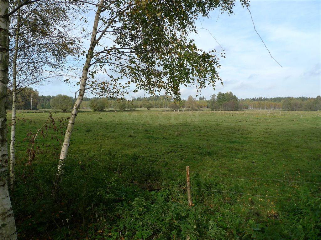 Działka siedliskowa na sprzedaż Grzegorze  14000m2 Foto 2