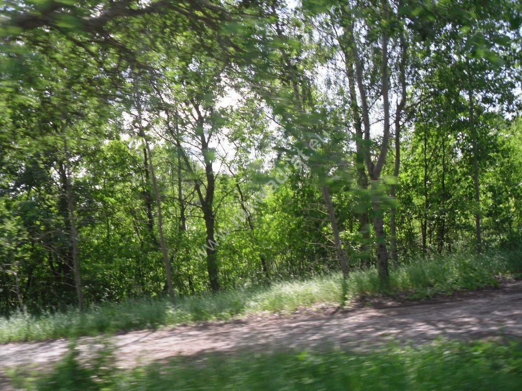 Działka siedliskowa na sprzedaż Sowia Wola  75115m2 Foto 6