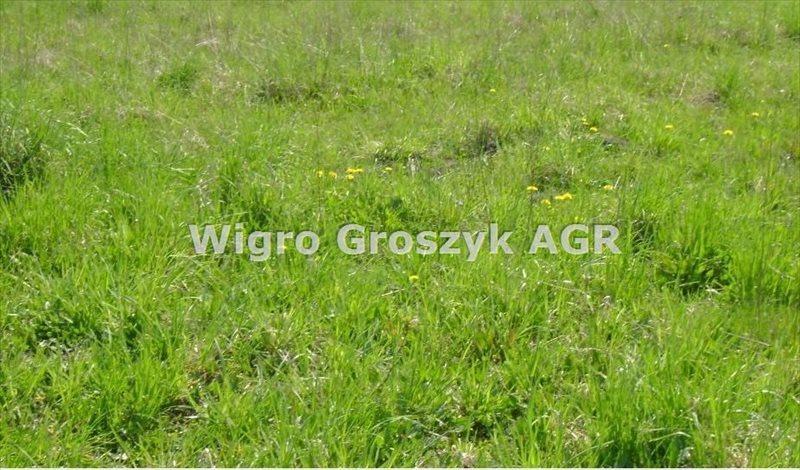 Działka rolna na sprzedaż Błogosławie  13316m2 Foto 1