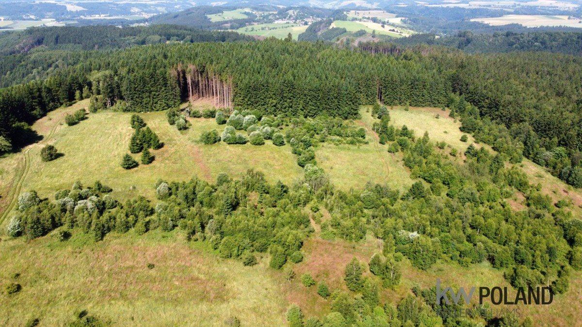 Działka rolna na sprzedaż Kudowa-Zdrój, Pstrążna  14309m2 Foto 4