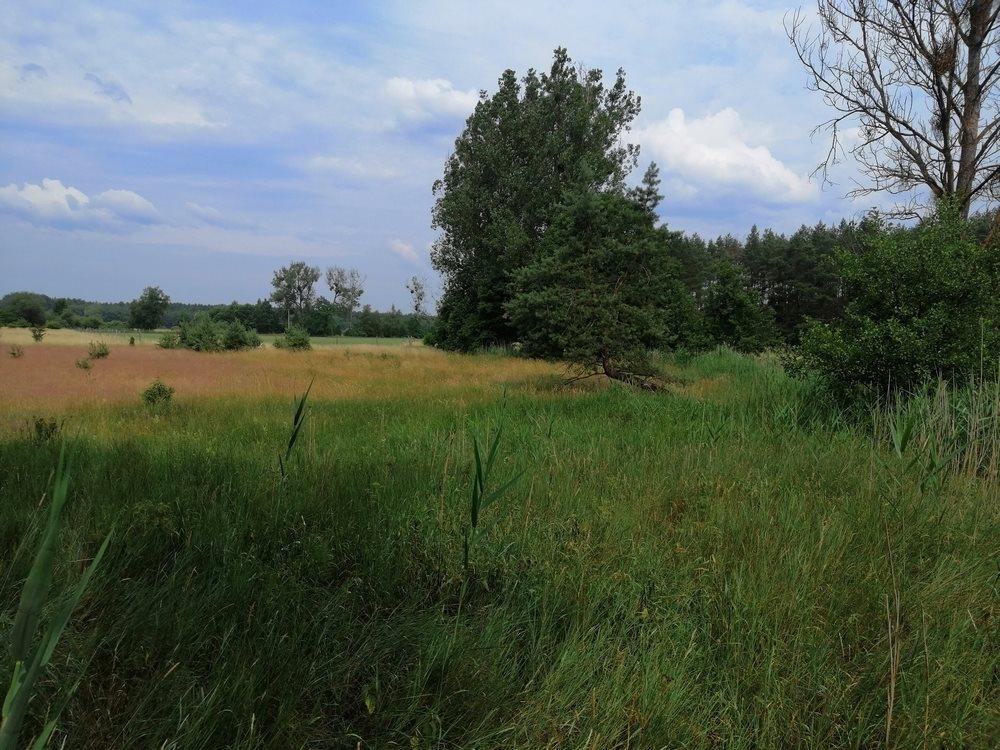 Działka siedliskowa na sprzedaż Sowno  16100m2 Foto 4