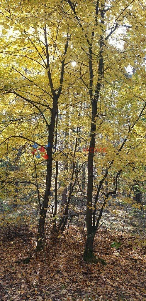 Działka leśna z prawem budowy na sprzedaż Sękocin-Las  2300m2 Foto 3