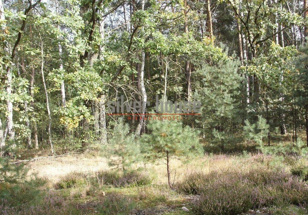 Działka siedliskowa na sprzedaż Boryszew  15000m2 Foto 3
