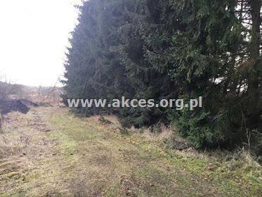 Działka leśna na sprzedaż Henryków-Urocze  27900m2 Foto 10