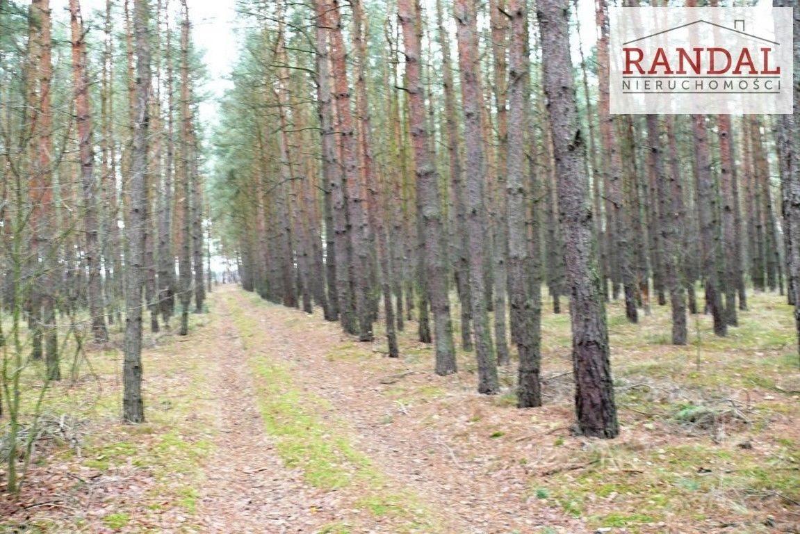 Działka leśna na sprzedaż Młodzikówko  107010m2 Foto 2
