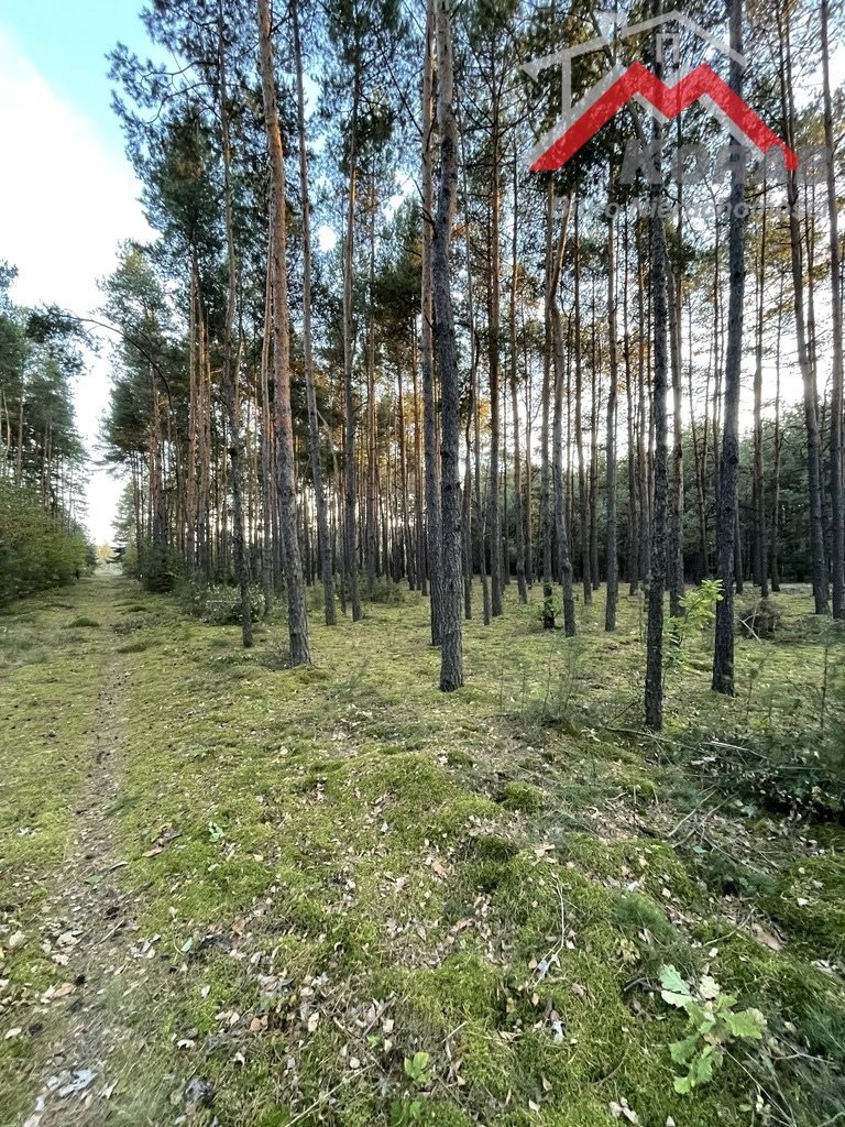 Działka leśna na sprzedaż Sowia Wola  3125m2 Foto 3