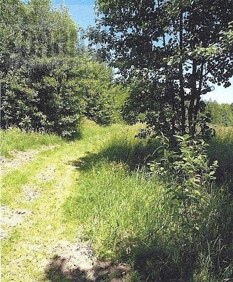 Działka leśna na sprzedaż Białystok, Dojlidy Górne  4322m2 Foto 1