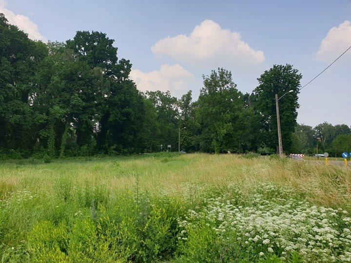 Działka rolna pod dzierżawę Chojna  2013m2 Foto 8