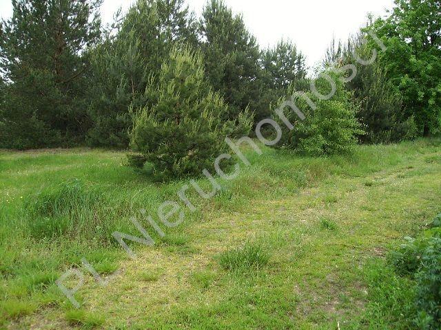 Działka rolna na sprzedaż Mszczonów  10000m2 Foto 4