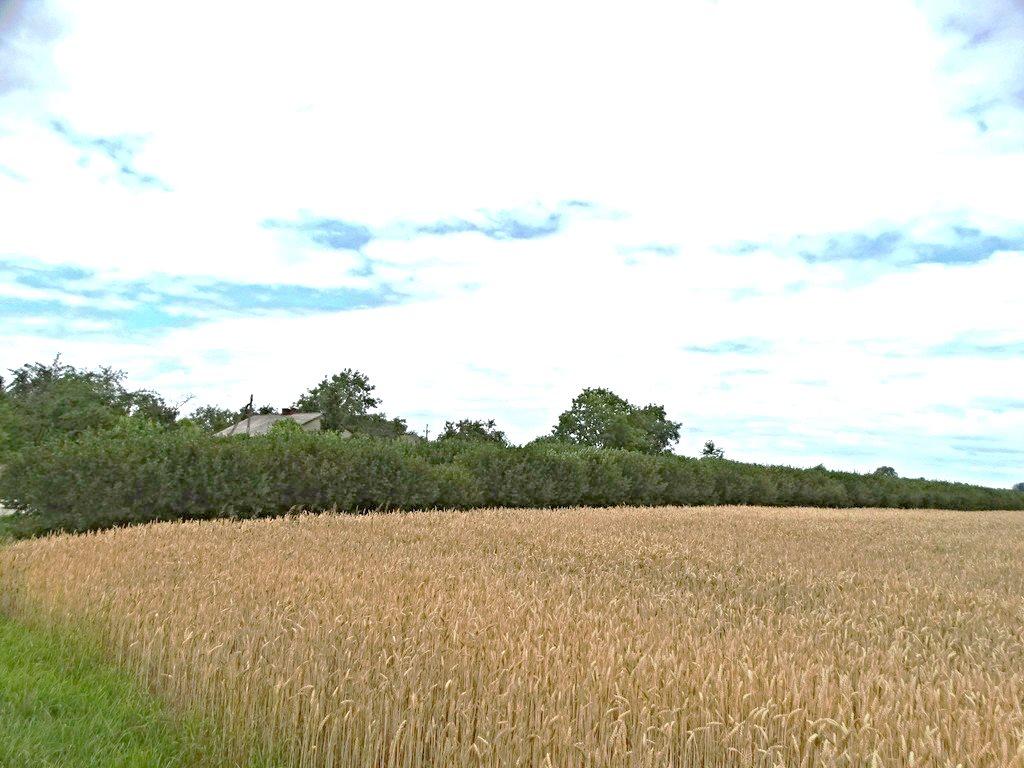Działka rolna na sprzedaż Skrobów  10600m2 Foto 1