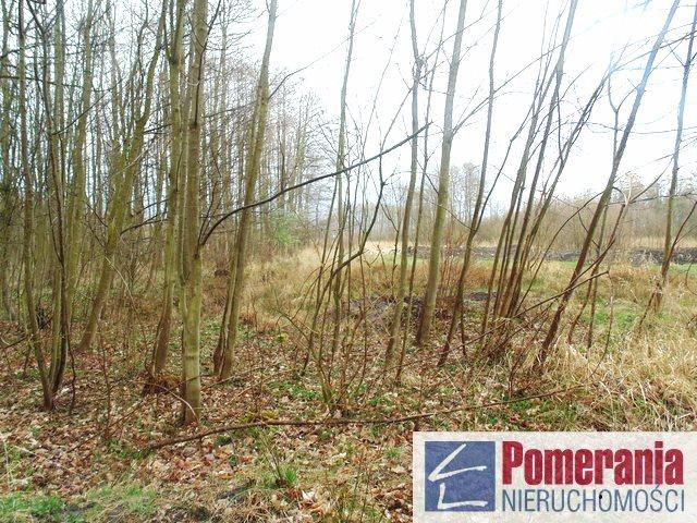 Działka siedliskowa na sprzedaż Kołczewo  9357m2 Foto 3