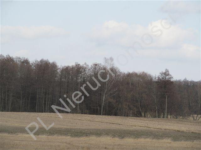 Działka rolna na sprzedaż Transbór  11200m2 Foto 4