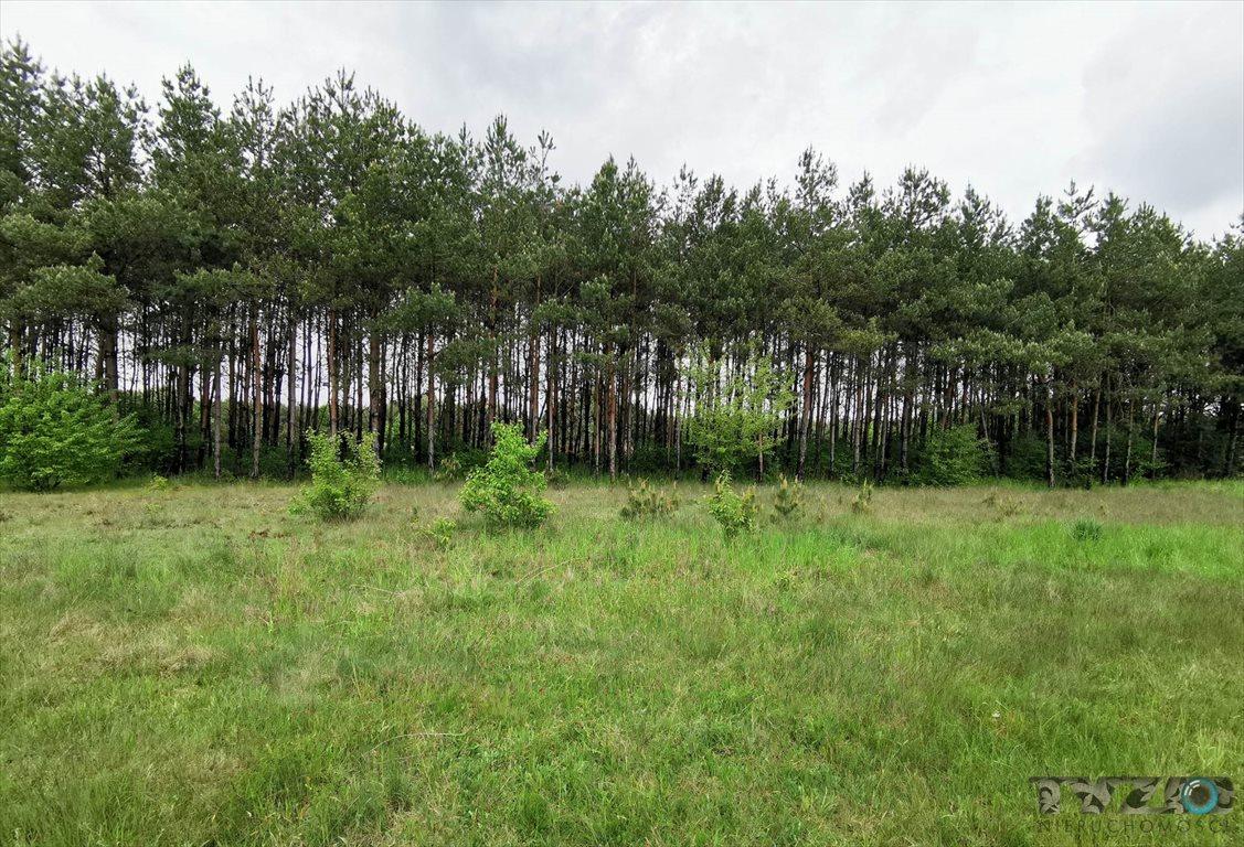 Działka rolna na sprzedaż Warszówka  12200m2 Foto 1