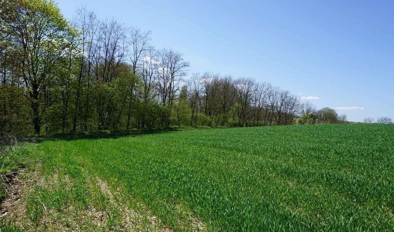 Działka rolna na sprzedaż Brzezinka  3200m2 Foto 2