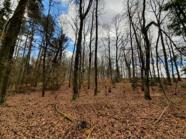Działka leśna na sprzedaż Grądzkie  1404m2 Foto 3