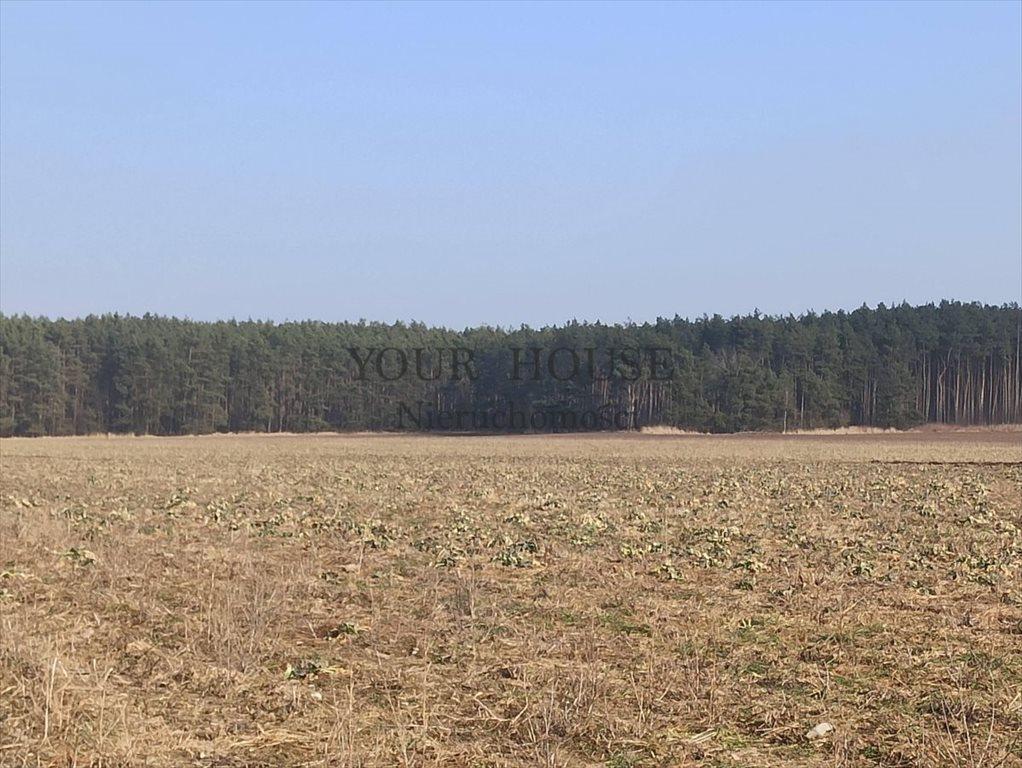 Działka budowlana na sprzedaż Miłoszyce, Asnyka  1231m2 Foto 3