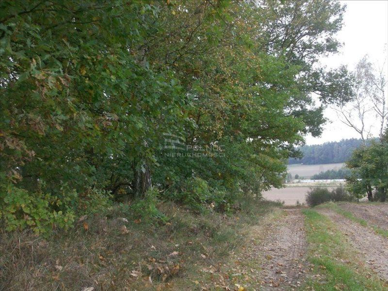 Działka leśna na sprzedaż Bolesławiec, Zabobrze  21908m2 Foto 3