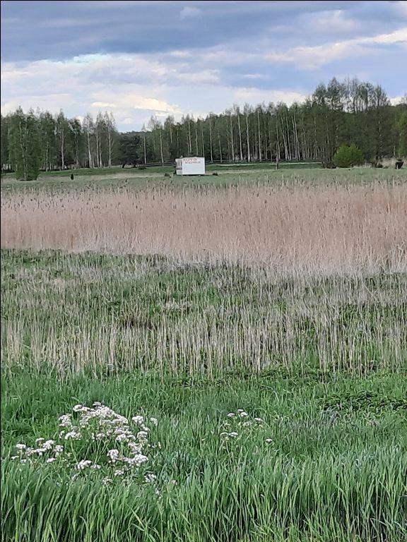 Działka rolna na sprzedaż Mostkowo, Mostkowo, Mostkowo  22000m2 Foto 3
