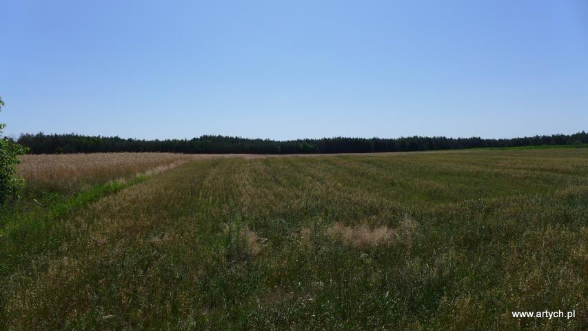 Działka rolna na sprzedaż Teofilówka  40371m2 Foto 3