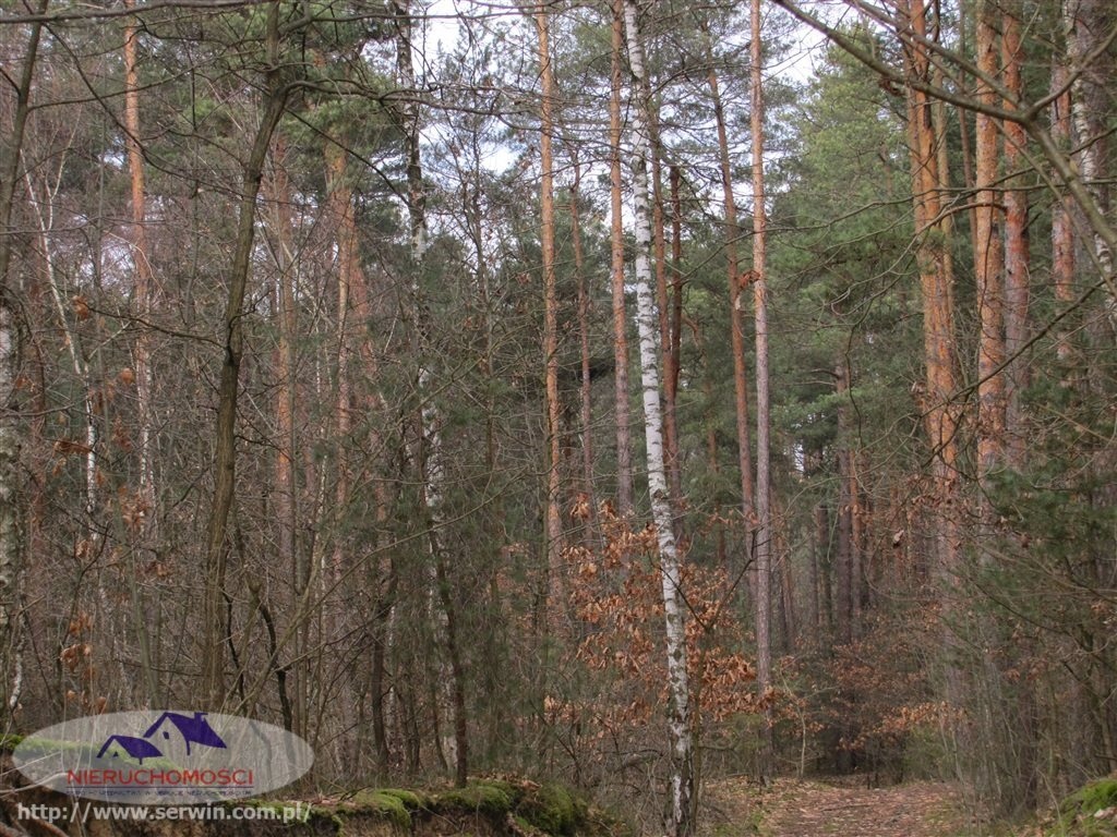 Działka leśna na sprzedaż Gruszów Wielki  11500m2 Foto 1