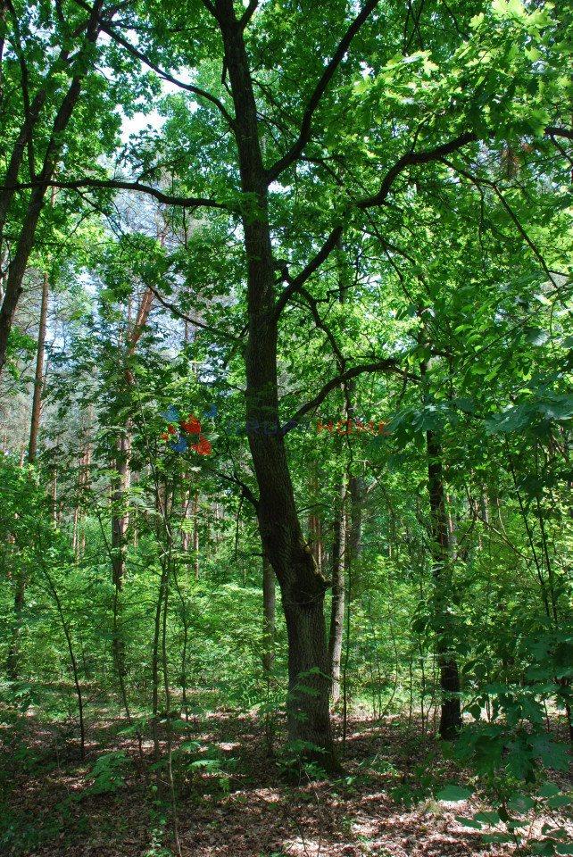 Działka leśna z prawem budowy na sprzedaż Sękocin-Las  2300m2 Foto 5