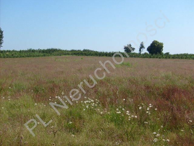 Działka rolna na sprzedaż Wygnanka  10000m2 Foto 2