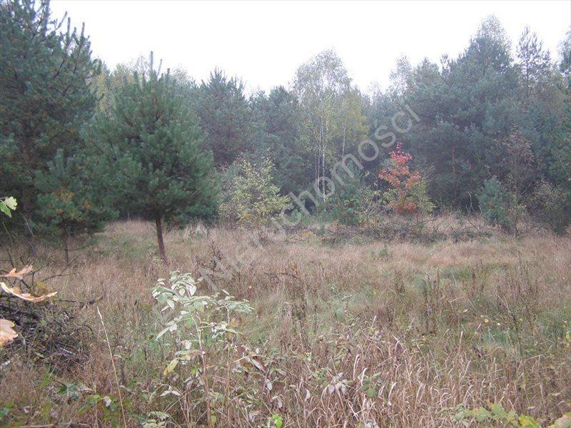 Działka rolna na sprzedaż Pieńki Osuchowskie  27700m2 Foto 3