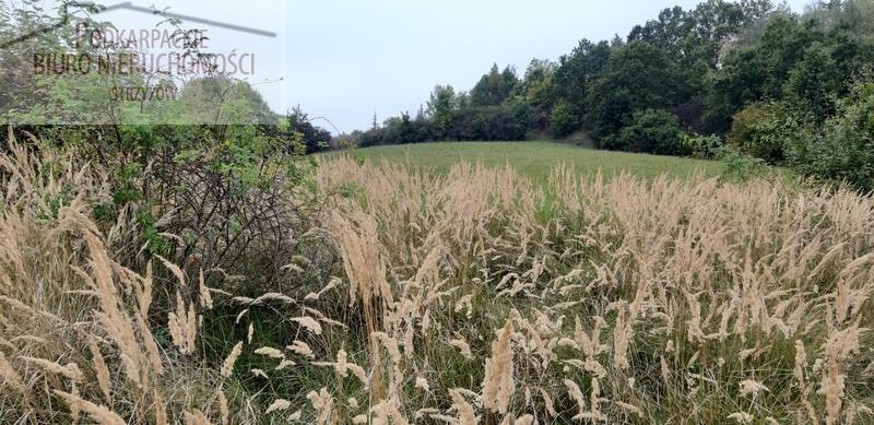 Działka rolna na sprzedaż Babica  4300m2 Foto 1