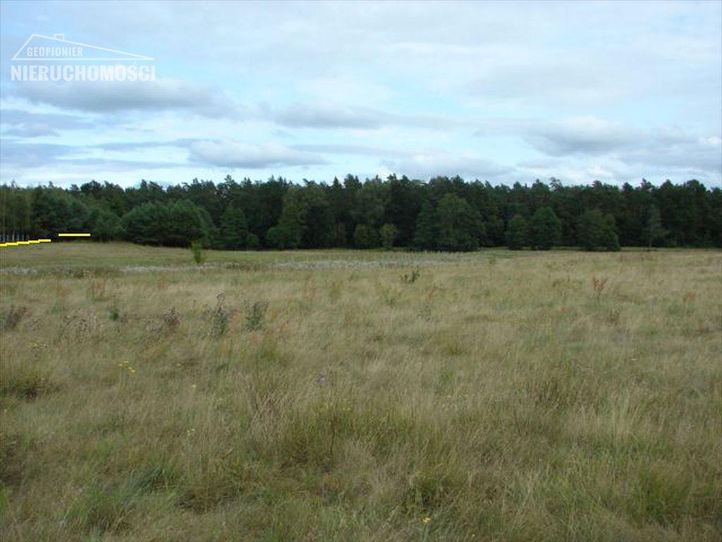 Działka rolna na sprzedaż Lubień, Lubień  46500m2 Foto 6