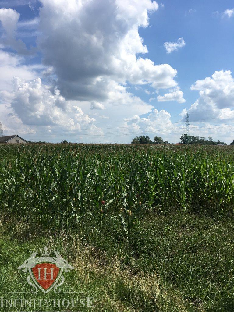 Działka rolna na sprzedaż Nowe Paski  200000m2 Foto 3