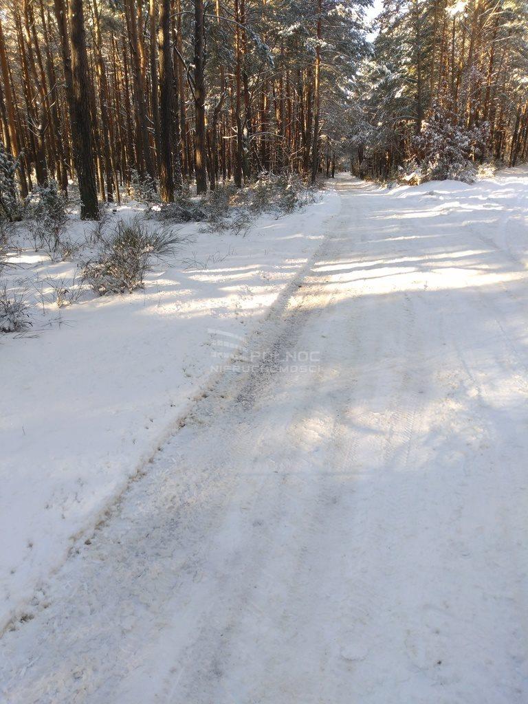 Działka leśna na sprzedaż Kuźnica  6100m2 Foto 7