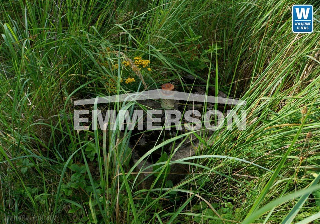 Działka leśna na sprzedaż Piaski Duchowne  5000m2 Foto 1