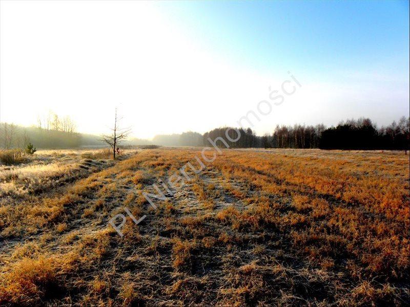 Działka rolna na sprzedaż Stanisławów  12000m2 Foto 4