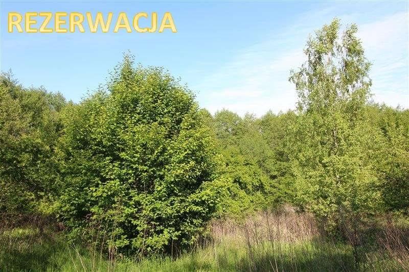 Działka inna na sprzedaż Gronowo Górne, Las, Gronowo Górne  15968m2 Foto 1