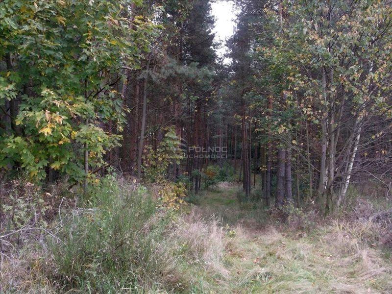 Działka leśna na sprzedaż Bolesławiec, Zabobrze  21908m2 Foto 9