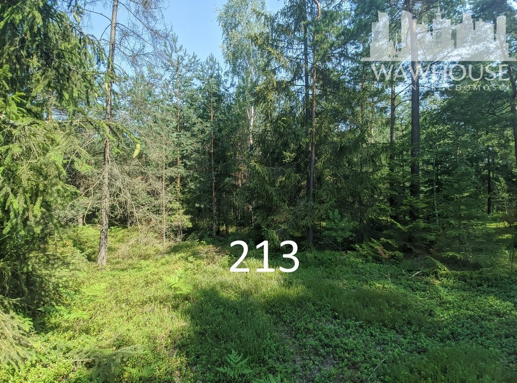 Działka leśna na sprzedaż Czernice  23500m2 Foto 13