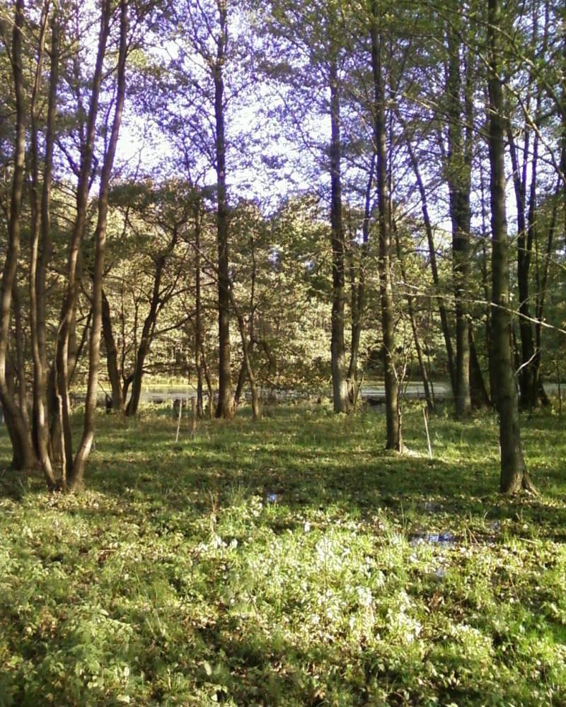 Działka budowlana na sprzedaż Wołowe Lasy N/Notecią  1500m2 Foto 3