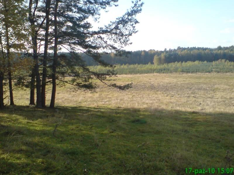 Działka budowlana na sprzedaż Wołowe Lasy N/Notecią  1500m2 Foto 2